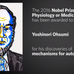 Japanese researcher Yoshinori Ohsumi receives the Nobel Prize for his work on autophagy